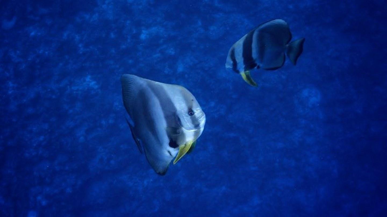 Underwater Footage2